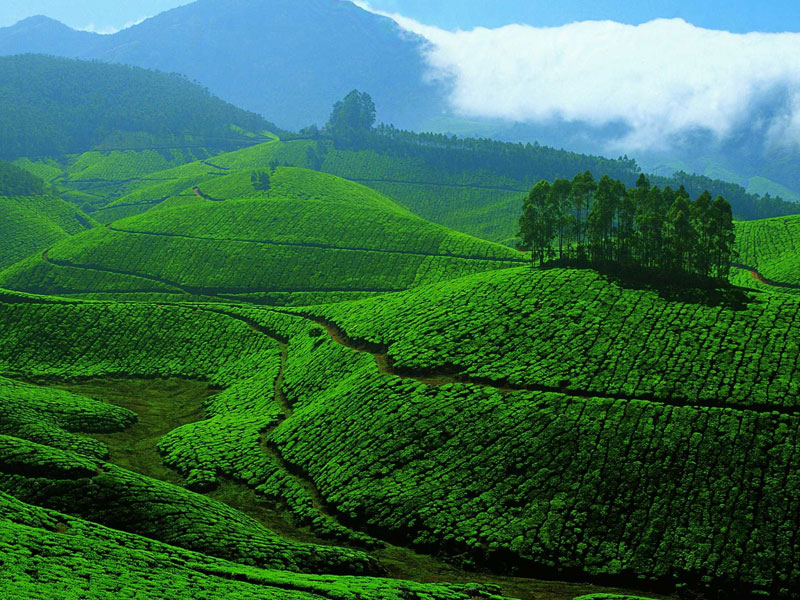 munnar-thekkady-group-tour-package-from-coimbatore